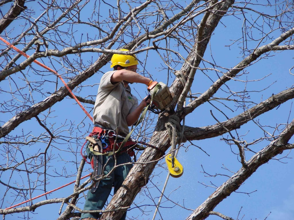 Tree removal by Arbor Pro Tree Service Company in Montgomery, AL